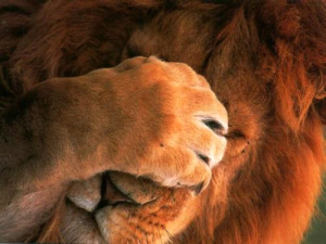 leon verguenza ajena